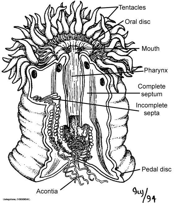 Digestive Systems In Different Phylums